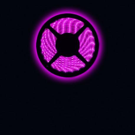 Ruban LED 3528 / 60 LED mètre rose pour intérieur (IP65) longueur 5 mètres